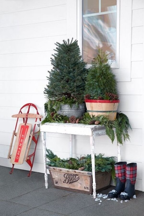 Mini pine trees for Christmas decoration for outdoor garden