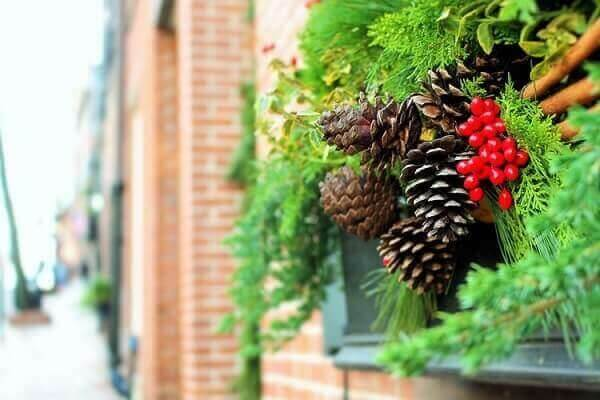 Dry pinecones and green foliage for Christmas garden decoration
