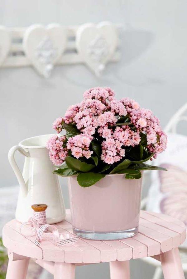 Decoração branca e rosa com flor da fortuna