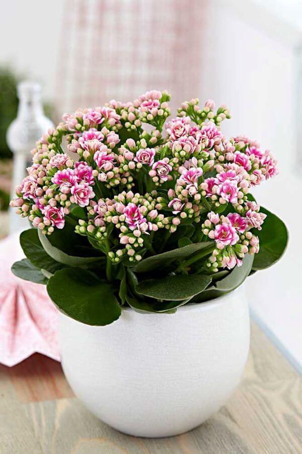Vaso flor da fortuna branco e delicado