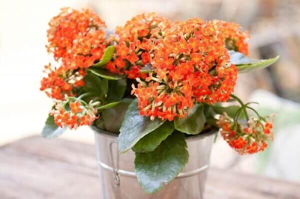 Decoração com vaso de flor da fortuna laranja, a famosa flor kalanchoe