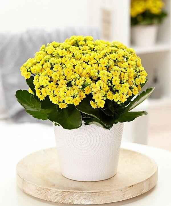 Mesa lateral decorada com flor da fortuna amarela