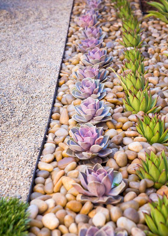 Jardim de suculentas com seixos
