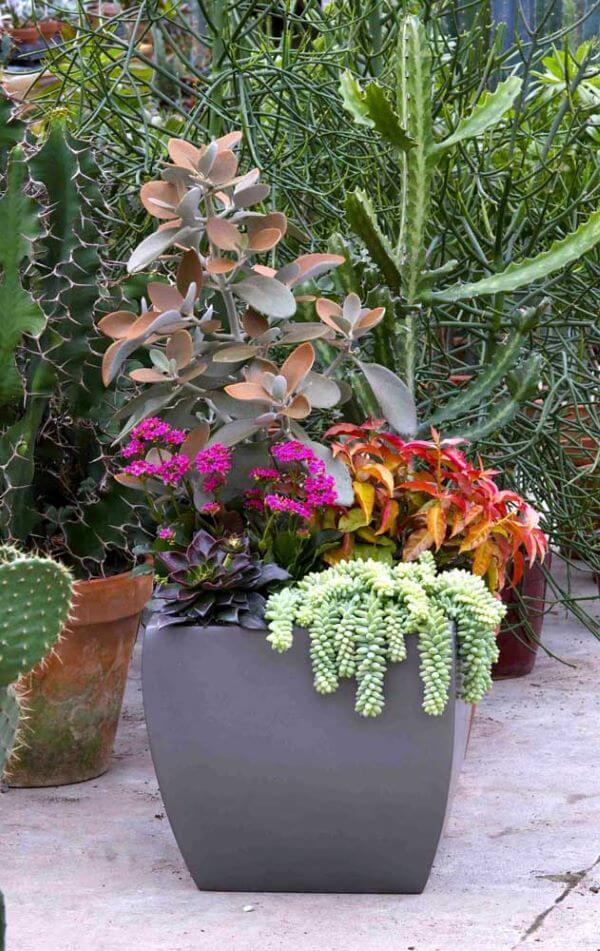 Jardim decorado com flor da fortuna