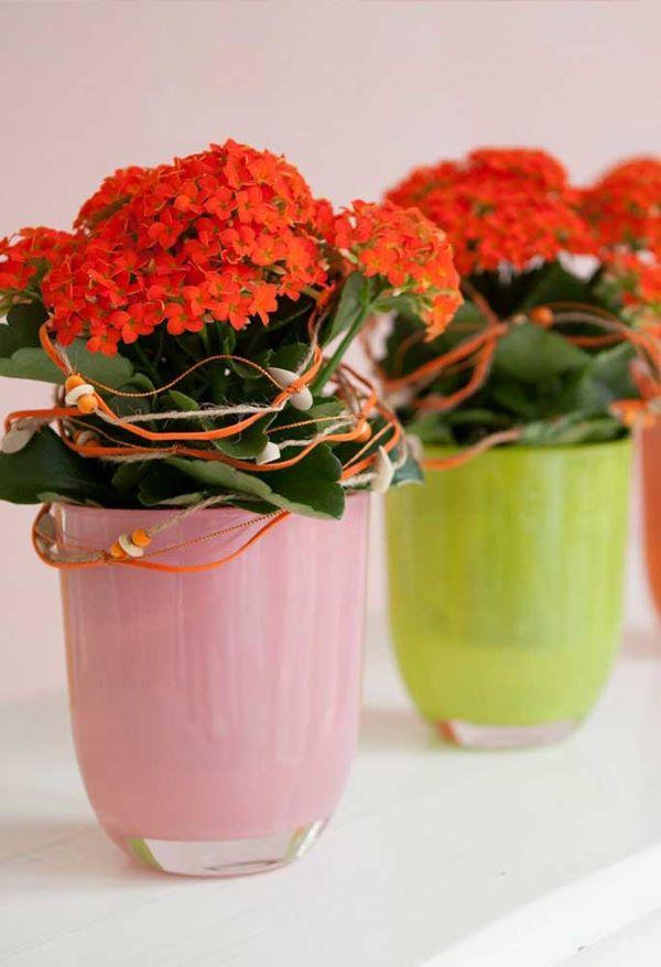 Deixe sua decoração ainda mais bonita com a flor da fortuna