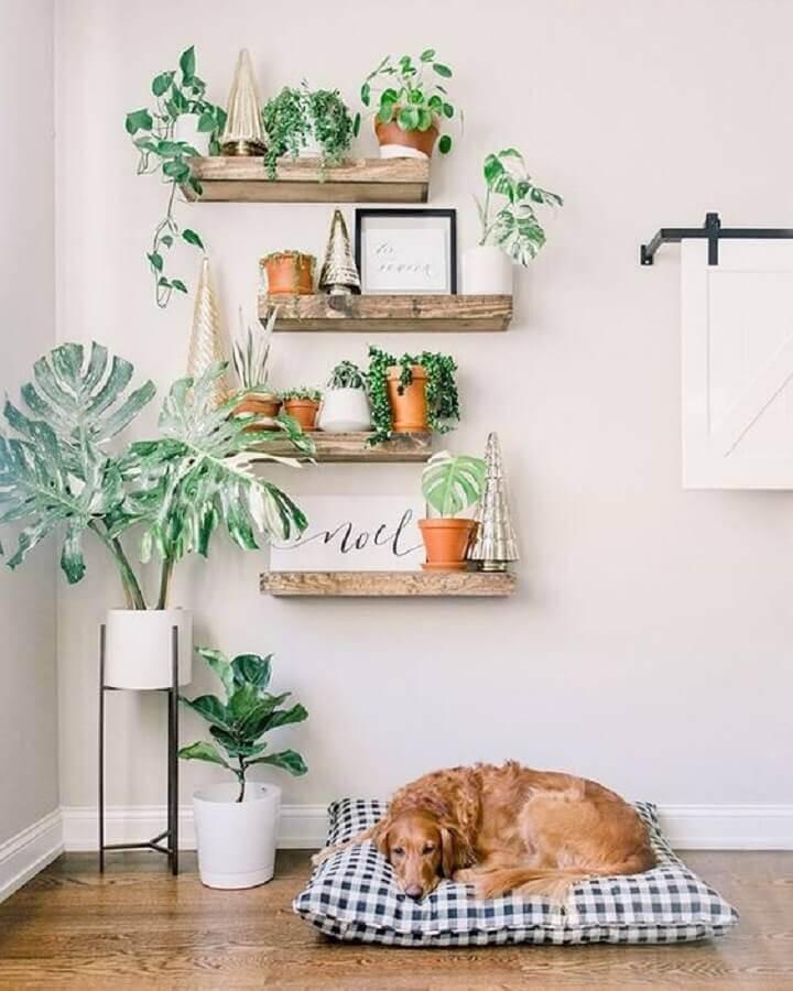 modelo rústico de prateleira de madeira para plantas Foto Terrários & Suculentas