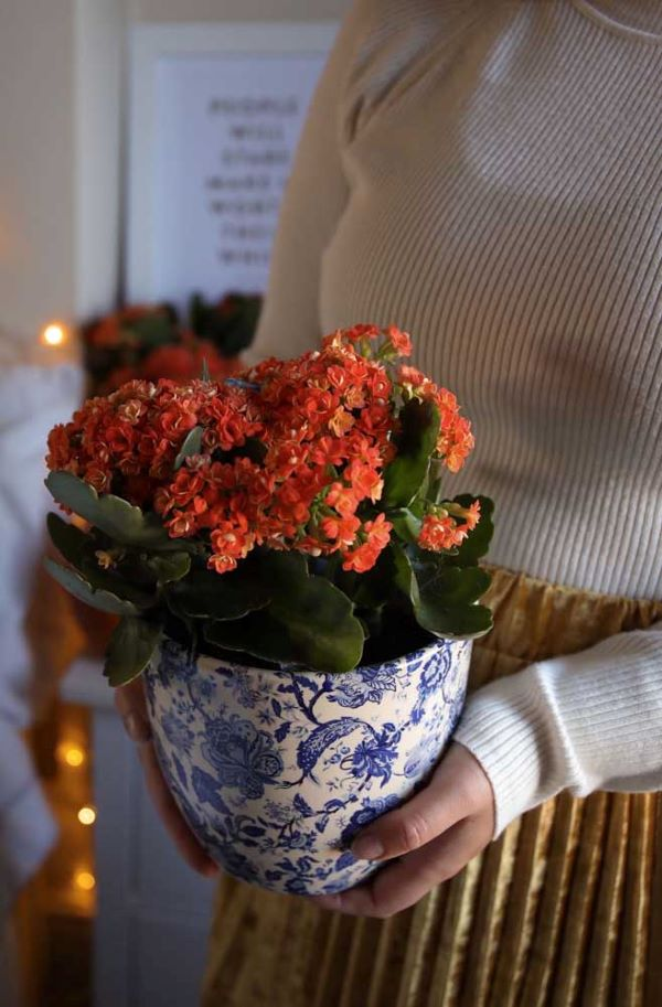 Vaso de flor da fortuna de cerâmica