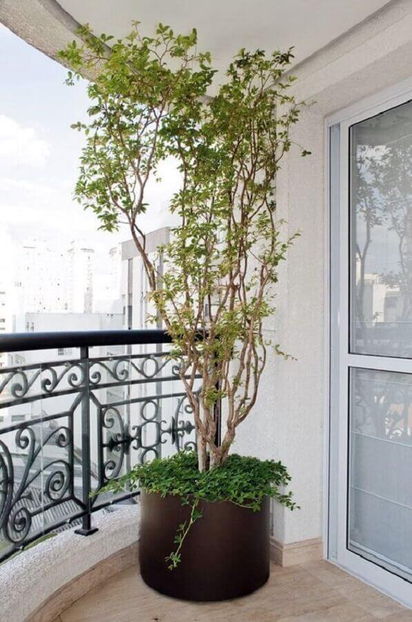 vasos de plantas para varanda grande Foto Simples Decoração