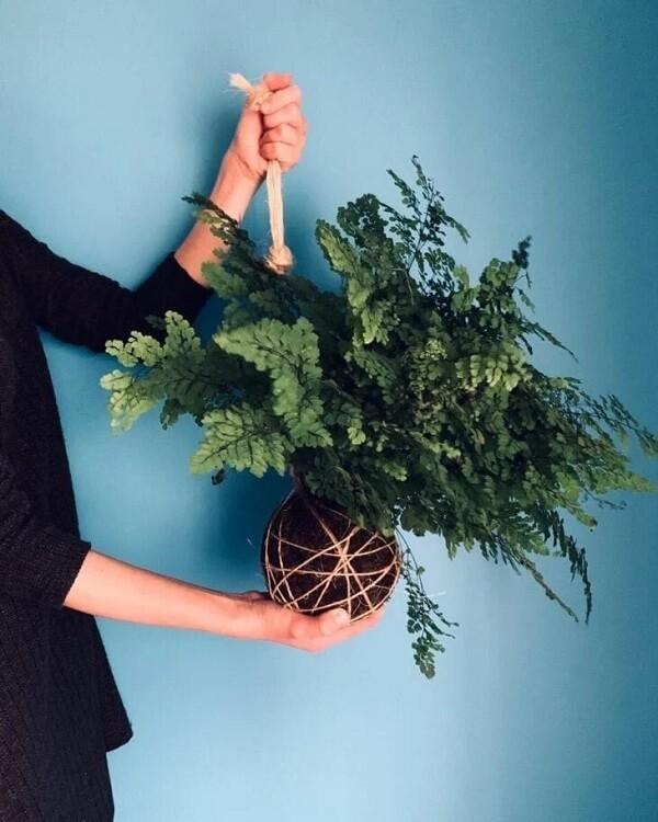 É possível cultivar uma linda kokedama de Avenca