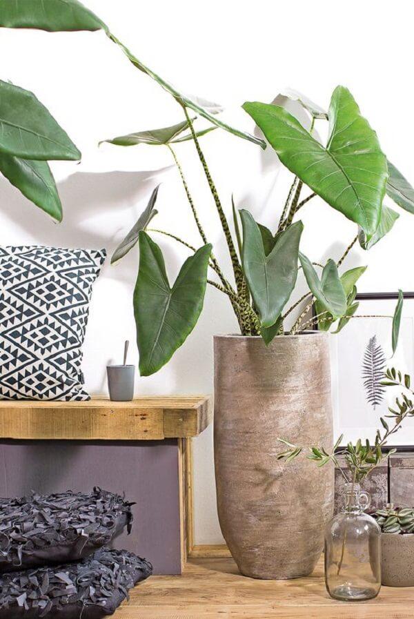 A Alocasia Zebrina também é uma planta tóxica se ingerida