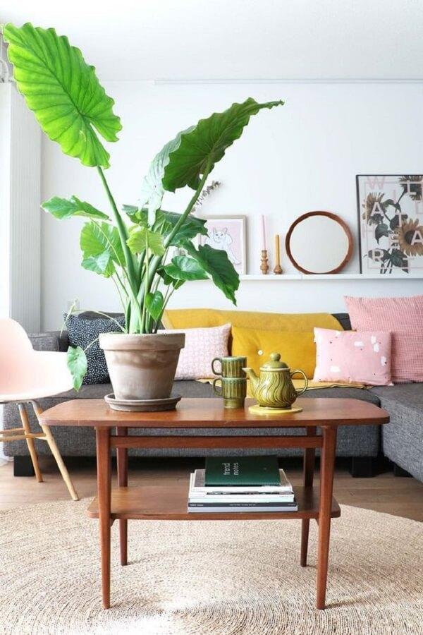 A planta Alocasia decora diferentes ambientes da casa