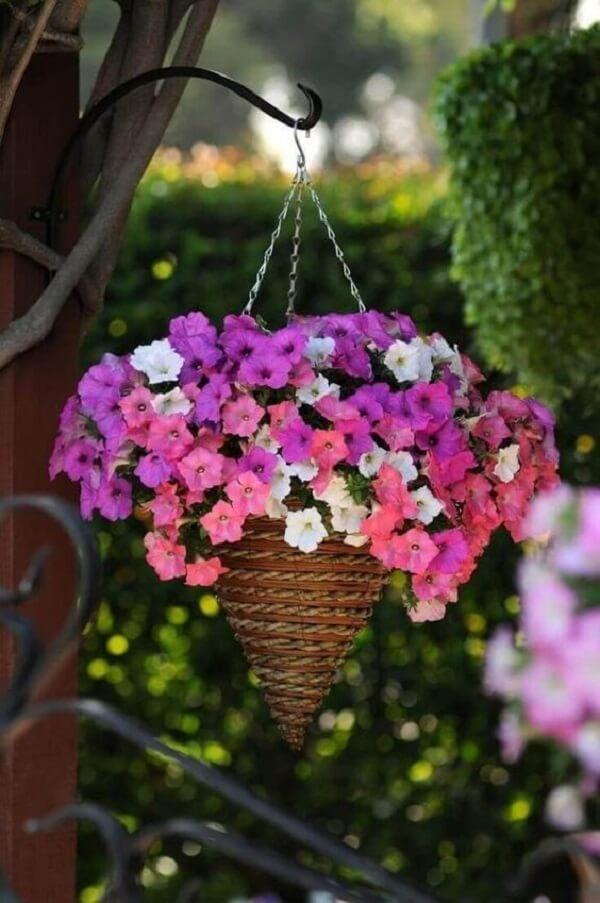 As petúnias são flores para vaso suspenso
