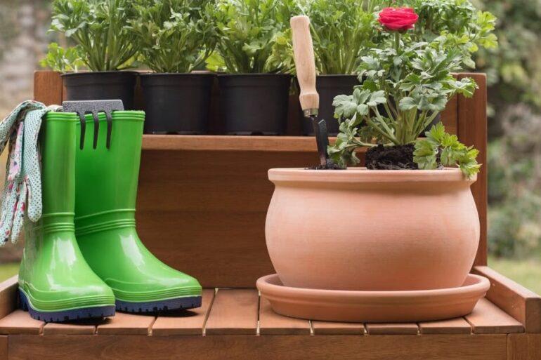 Conheça diversas espécies de plantas fáceis de cuidar