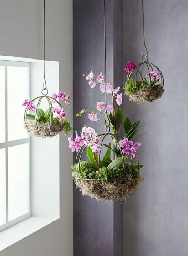 Mini orquídeas cultivadas como flores para vaso suspenso