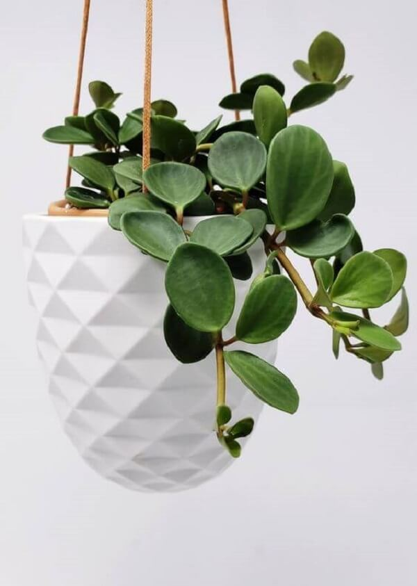 Modelo de vaso suspenso branco e delicado