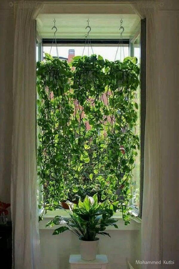 Os vasos suspensos para plantas pendentes criam um efeito lindo em janelas