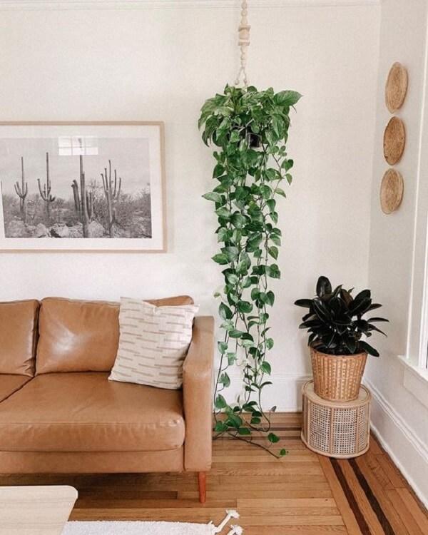 Sala de estar decorada com vaso de planta suspenso com jiboia pendente