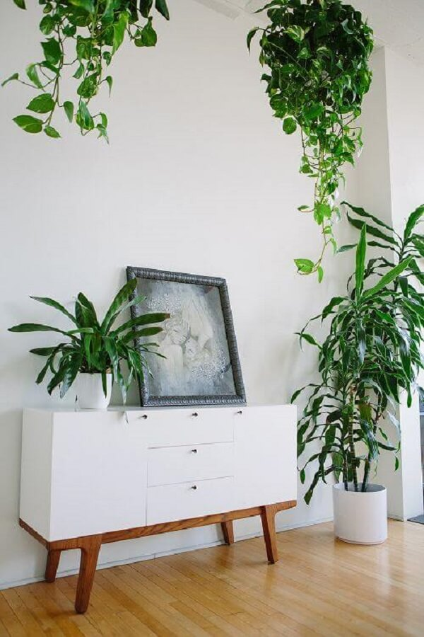 Vaso suspenso com planta jiboia pendente
