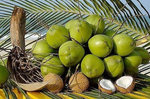 Aproveite os cocos do seu coqueiro