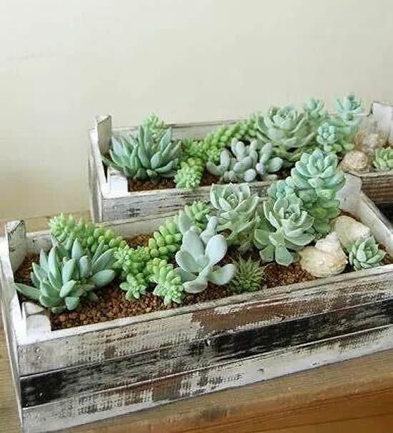 Vaso de madeira com suculentas para decorar a sala de estar
