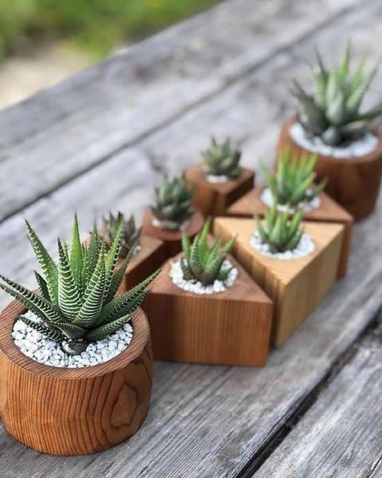 Vaso de madeira com suculentas pequenas