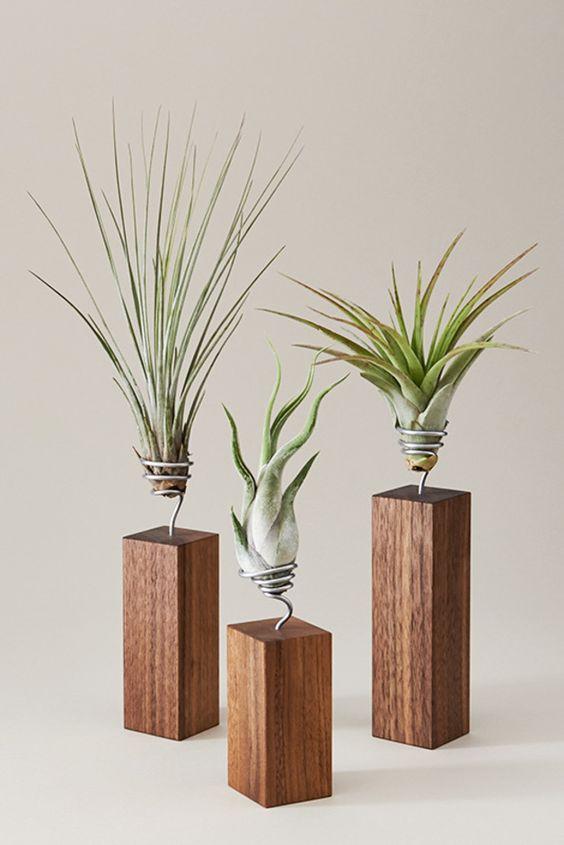 Vaso de madeira com plantas