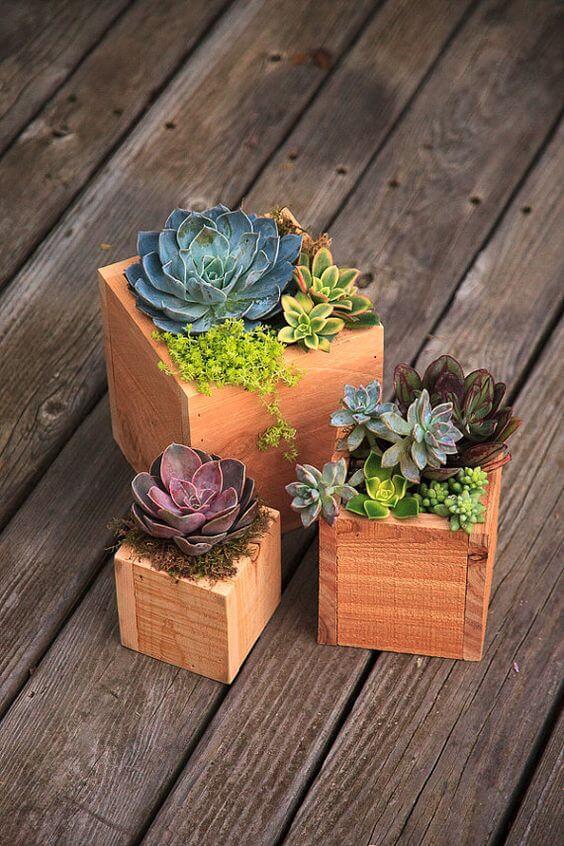 Vaso de madeira para suculentas