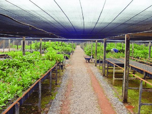 A tela protege e evita a entrada direta dos raios solares no viveiro de mudas