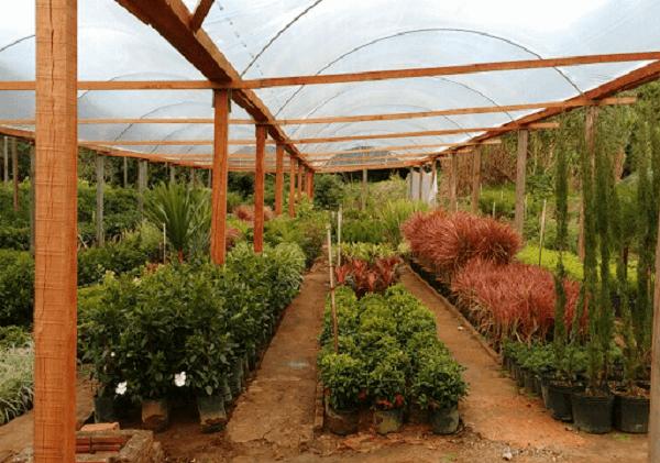 Antes de construir o viveiro de mudas nativas observe a existência de água no terreno