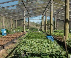 Avalie quais espécies serão cultivadas dentro do viveiro de mudas