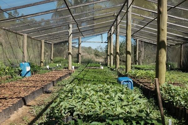 A planta baixa de viveiro de mudas é fundamental para o sucesso do projeto físico