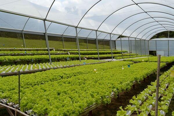 Produção de mudas em viveiro de hortaliças