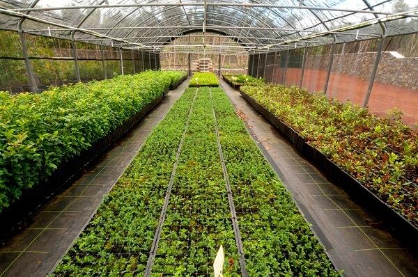 Projeto de viveiro de mudas frutíferas