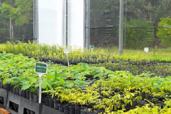 A planta baixa de viveiro de mudas mostra como o projeto irá ser feito