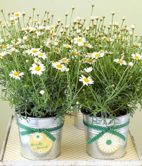 A flor margarida é símbolo de pureza e amor