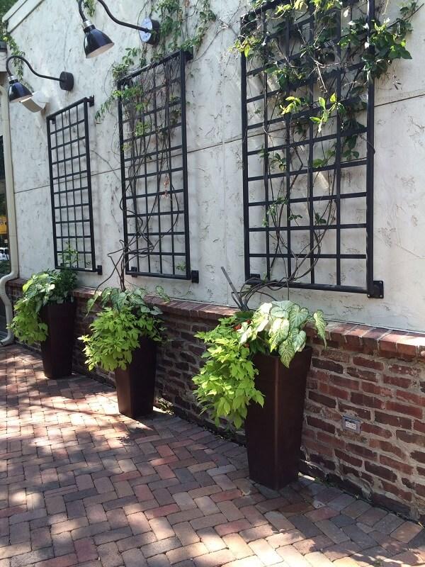 As plantas trepadeiras são ótimas para decoração de muro externo