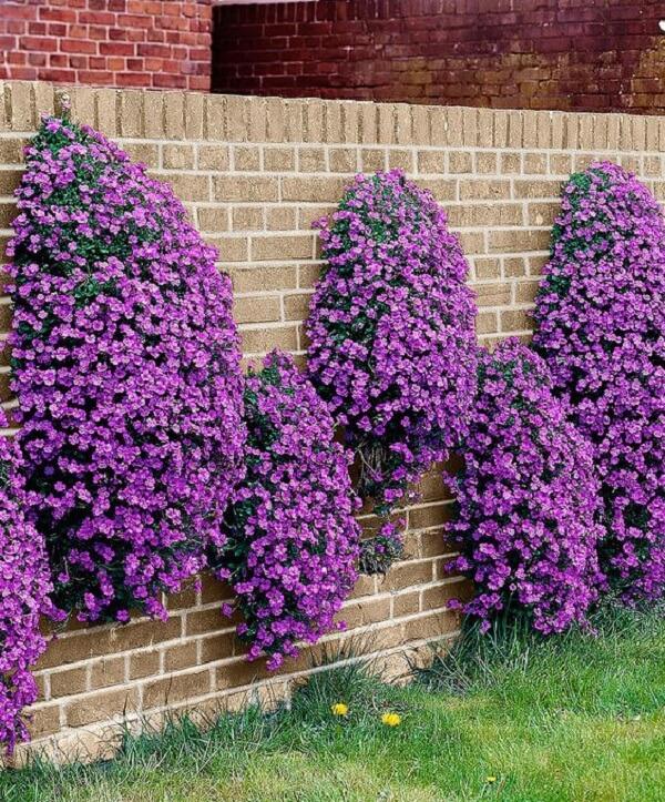 Muros decorados com plantas do tipo petúnias