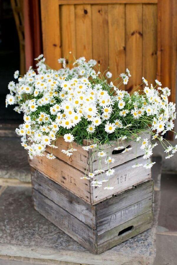 O caixote de madeira agrega valor ao arranjo de margarida