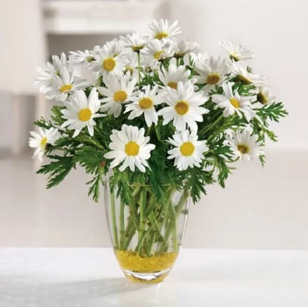 O vaso de margarida transparente realça a beleza da flor