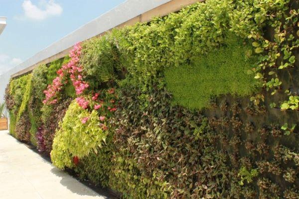 Muros bonitos com plantas