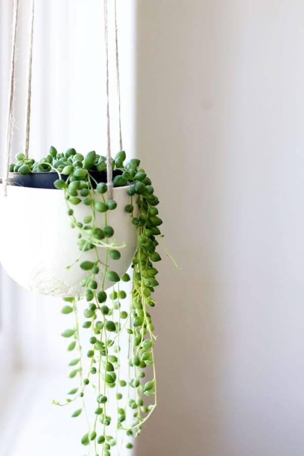 Suculentas pendentes de sombra com vaso branco