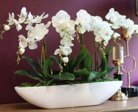 Vaso branco para orquídeas - Via: Revista VD