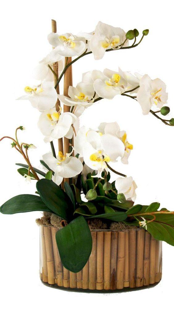 Vaso de madeira para orquídea branca
