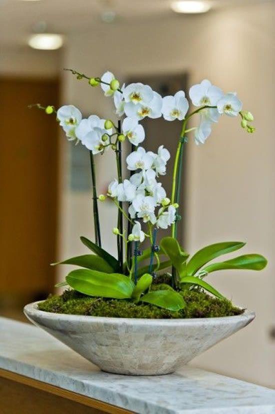 Vaso de orquídea feito de cimento