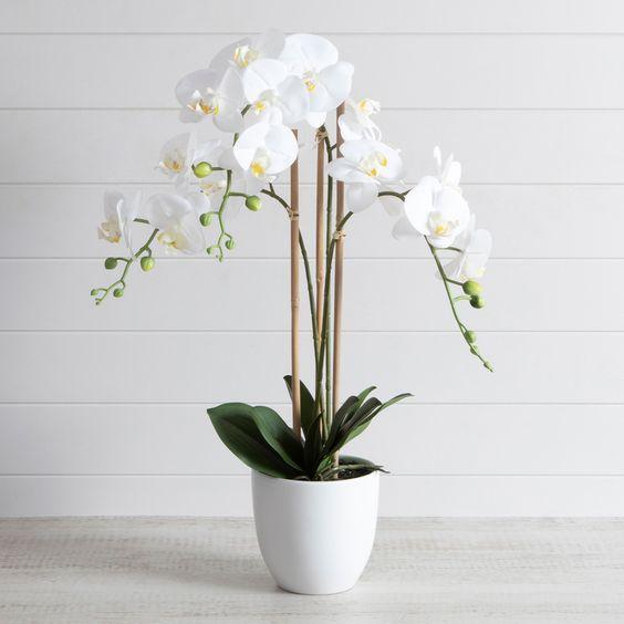 Vaso branco para orquídea