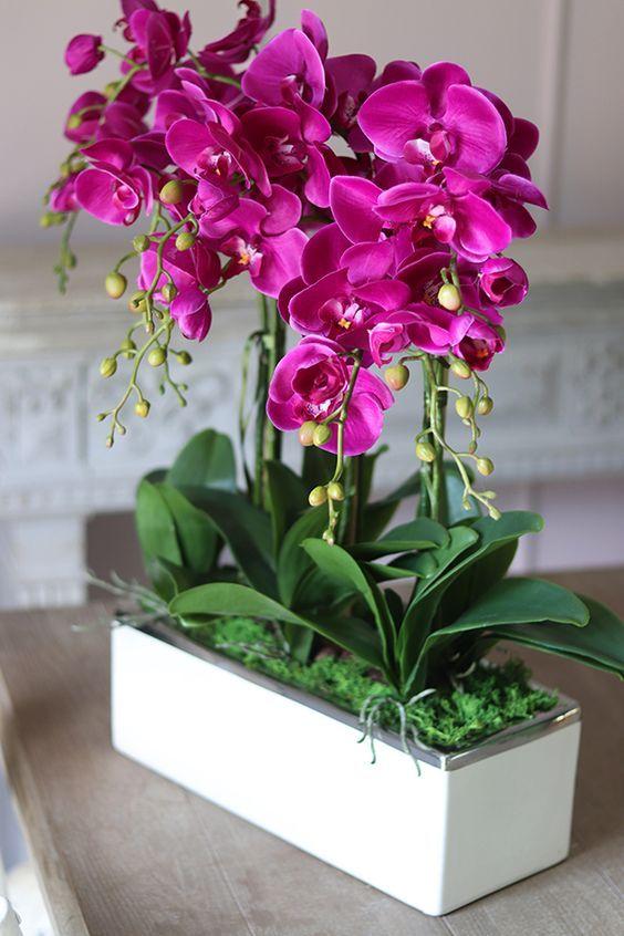 Vaso de orquídea pink para sala