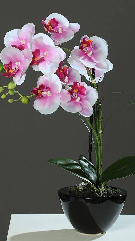 Vaso de orquídea preto
