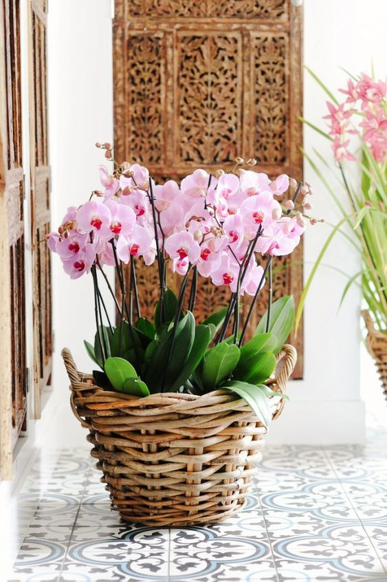 Vaso de orquídea rustico