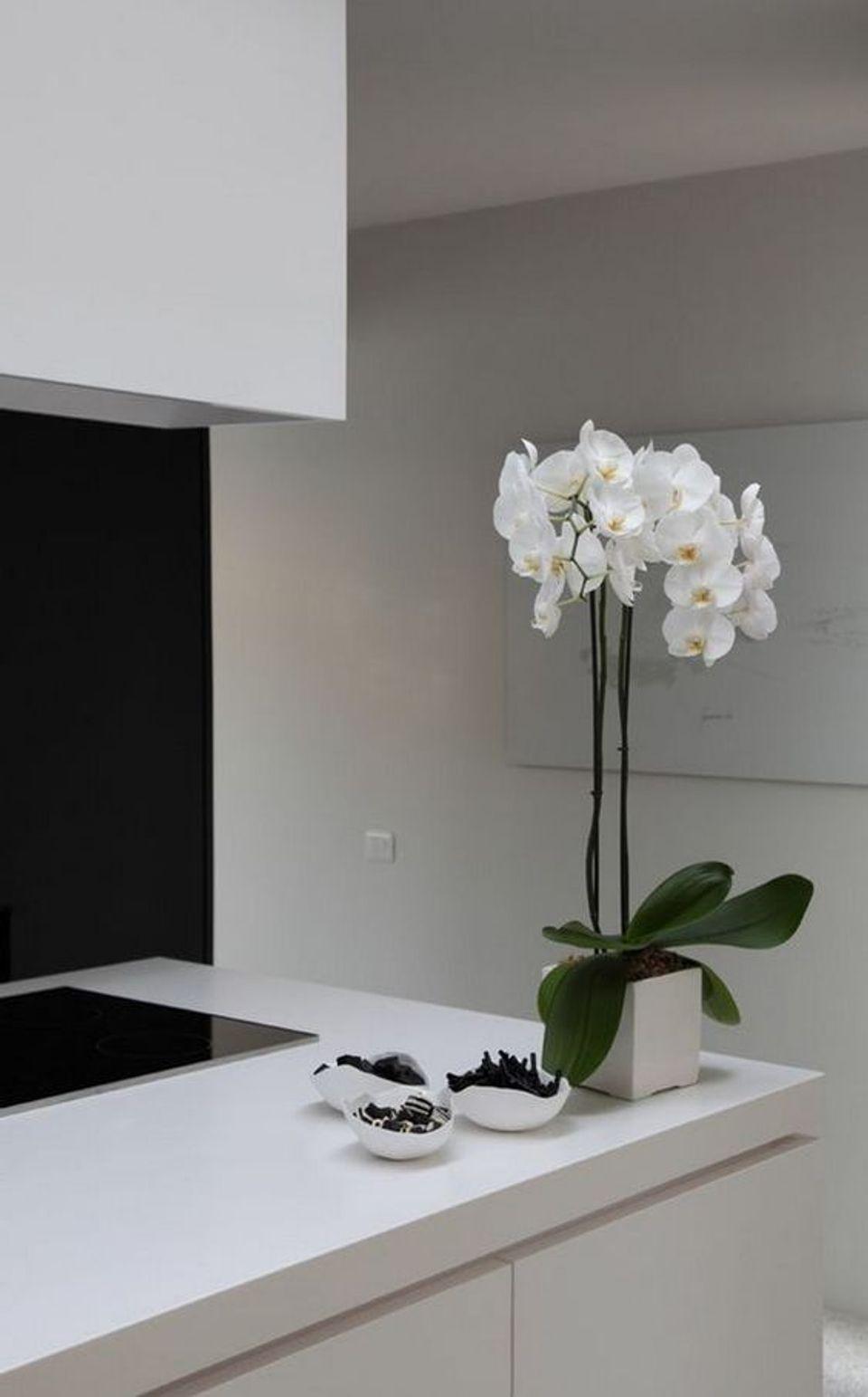Vaso de orquídea simples