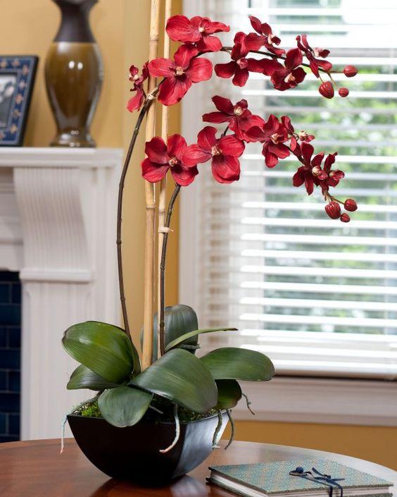 Orquídea vermelha na decoração